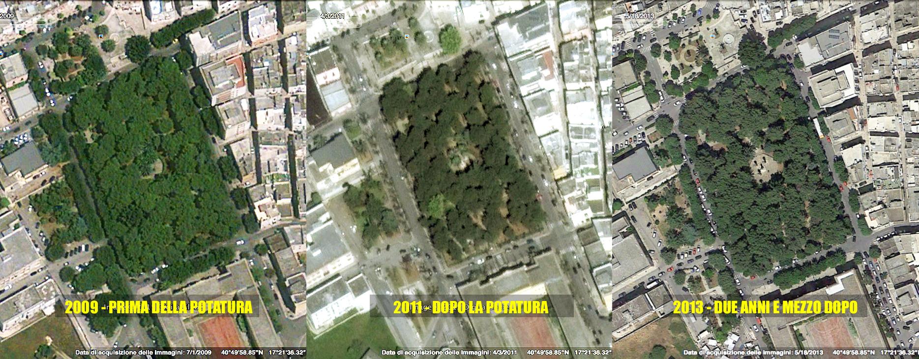 Fotogrammetria in sequenza del Parco della Rimembranza a Fasano; 2009 prima della potatura, 2011 dopo la potatura, 2013 due anni e mezzo dopo la potatura